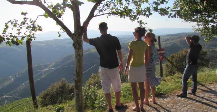 Valle del Douro: tour di 3 vigneti con pranzo