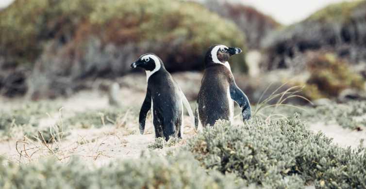Península do Cabo: Excursão de Meio Dia