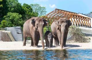 ARTIS Amsterdam Royal Zoo: Eintrittskarte