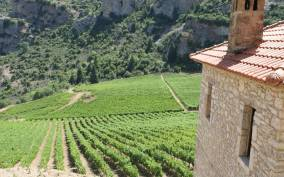 Athens: Full-Day Aigialeia Private Wine Tour with Lunch