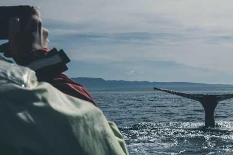 Reikiavik: avistamiento de ballenas en un yate de lujo