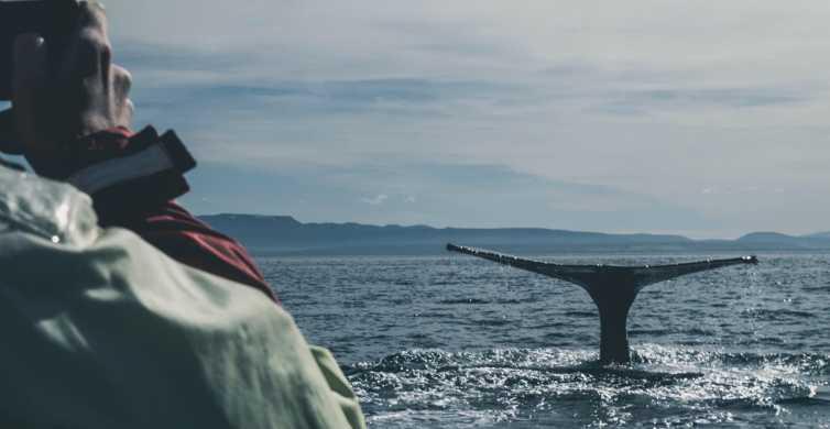 Reykjavík: Whale Watching On Board A Luxury Yacht