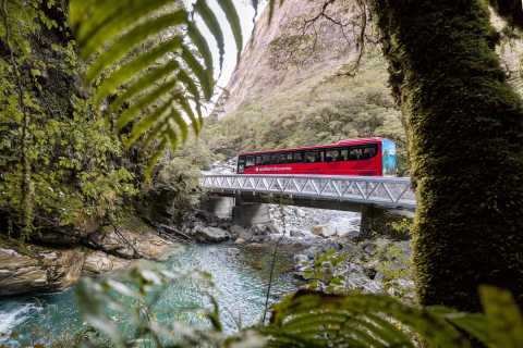 From Te Anau: 1-Day Milford Sound Coach & Cruise