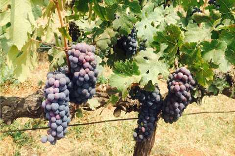 Nashik: tour de vino privado de un día con degustaciones de Mumbai