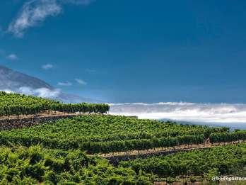 Tacoronte: Weingut-Führung mit Wein- und Käseverkostungen