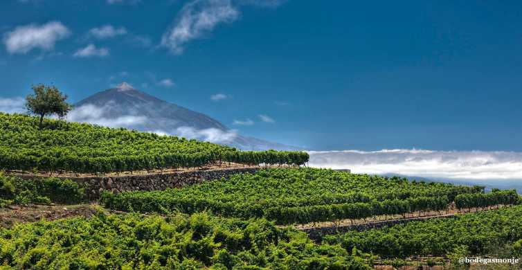 Tacoronte: Guided Winery Tour with Wine and Cheese Tastings