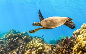 Maui: Eco-Friendly Molokini and Turtle Town Tour with Lunch