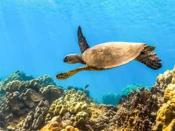 Maui: Molokini & Maluaka Beach Tour mit Mittagessen
