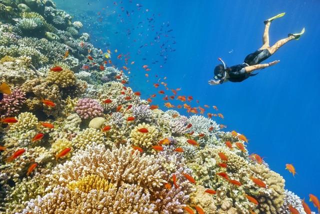 Muscat: 2 uur durende snorkeltocht