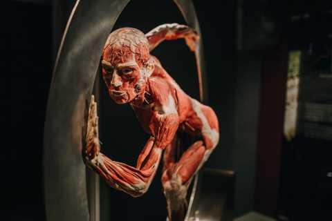 Heidelberg: Body Worlds Museum Entrance Ticket
