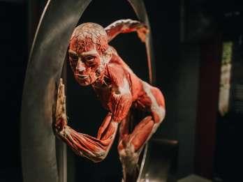 Heidelberg: Eintrittsticket für das Körperwelten-Museum