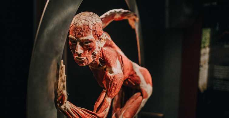 Heidelberg: Body Worlds Museum Entré Billet
