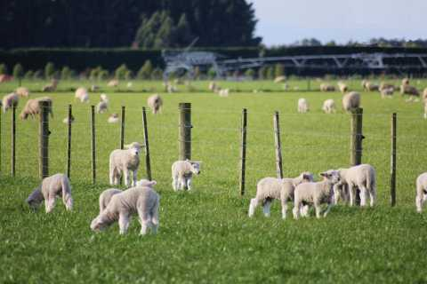 Canterbury Farm and Scenic Day Tour from Christchurch