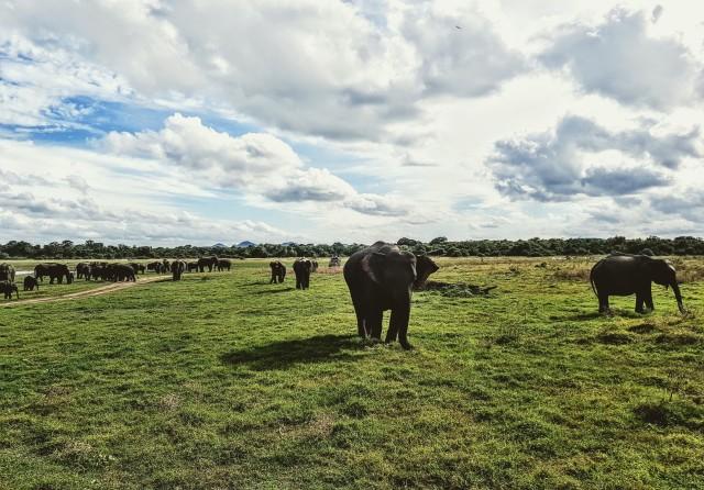 Dambulla & Kaudulla National Park Dagtour vanuit Colombo