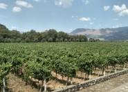 Etna: Weinverkostungstour