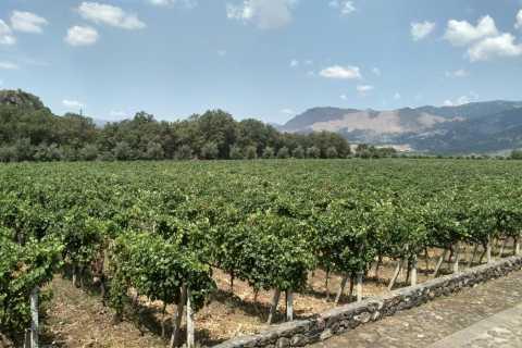 Etna: tour con degustazione di vino