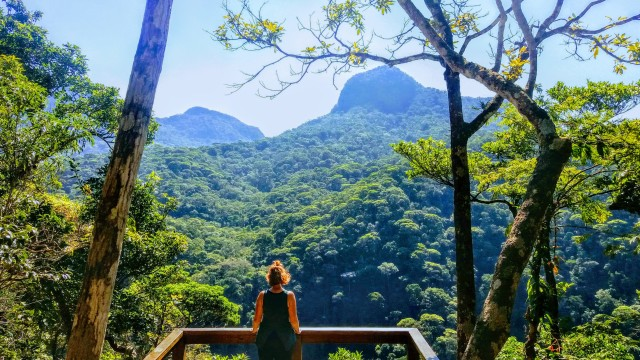 Tijuca Forest: Small Group Guided Family Hike