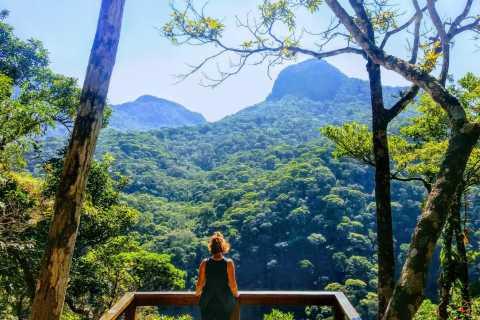 Floresta da Tijuca: Caminhada Familiar em Pequeno Grupo