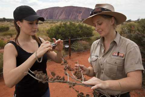 Uluru: Small Group Guided Tour with Sunset Refreshments