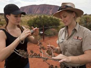 Uluru: Kleingruppentour mit Sonnenuntergang, Sekt und Snacks