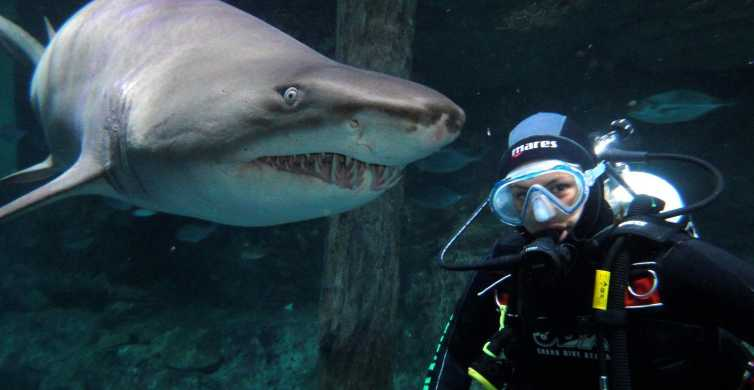 Shark Dive Xtreme at SEA LIFE Sydney