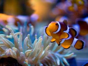 Two Oceans Aquarium: Ticket ohne Anstehen