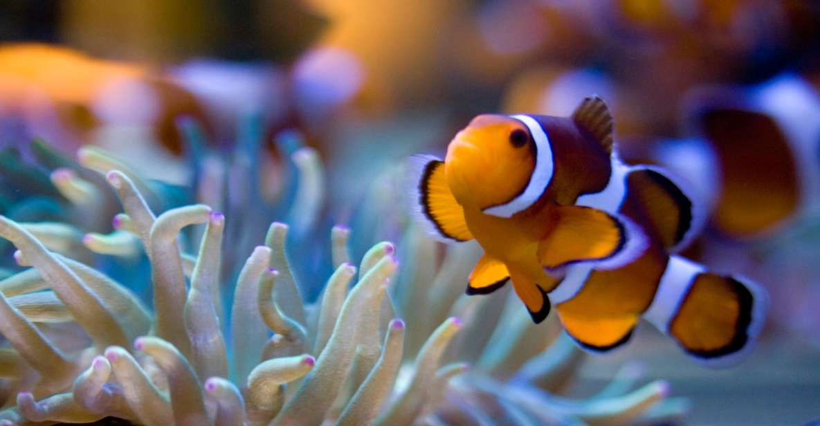 Two Oceans Aquarium: Skip-the-Line Entrance ticket