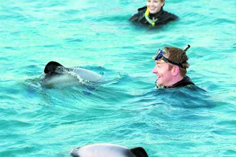 Akaroa: Swimming with Wild Dolphins 3-Hour Experience