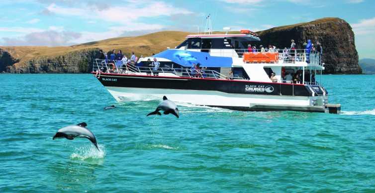 Akaroa Harbour 2-Hour Nature Cruise