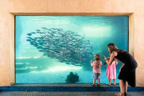 AQWA Aquarium of Western Australia General Entry Tickets
