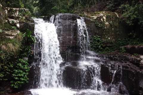 Gold Coast: Lamington National Park Small Group Tour