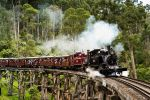From Melbourne: Healesville Sanctuary & Puffing Billy Train