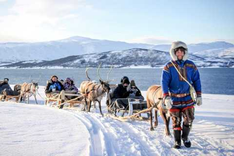 Tromsø: Reindeer Sledding & Feeding with a Sami Guide