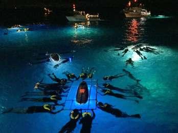 Big Island: Mantarochen-Abenteuer bei Nacht