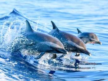 West Oahu: Öko-Segeltörn mit Schnorcheln und Delfinen