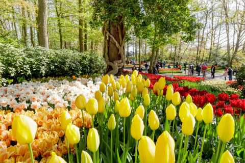 Amsterdam: Keukenhof & Countryside Small Group Tour