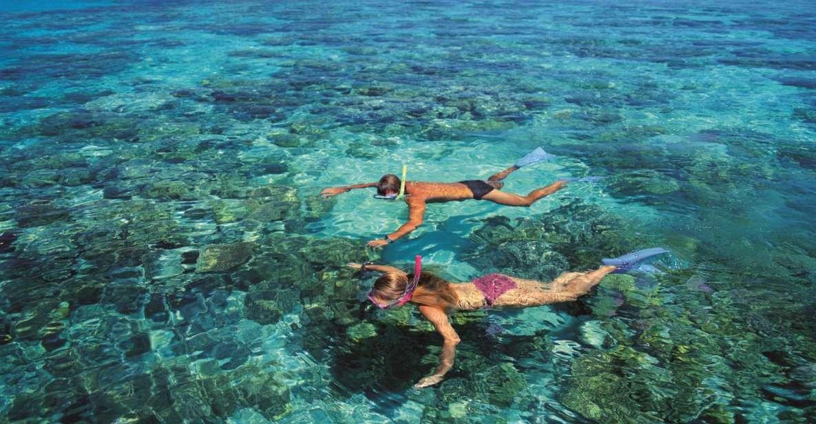 ケアンズ発:グリーン島 サンゴ礁 双胴船クルーズ