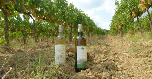 Azienda Agricola San Quirico: Traditional Winery Tour