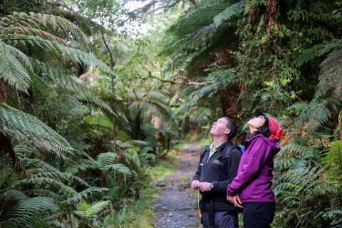 Milford Sound Retourtickets, -tochten en -cruises vanuit Queenstown