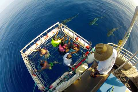 Oahu: Incredible 2-Hour Shark Dive on the North Shore