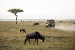 Joanesburgo: Safári no Parque Nacional de Pilanesberg 1 Dia