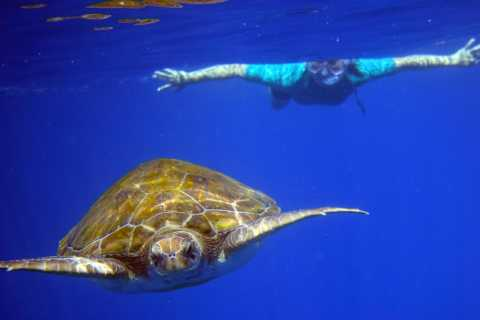 Snorkeling and Kayaking with Turtles