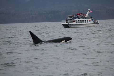 Whale Watching Tour in Victoria, BC