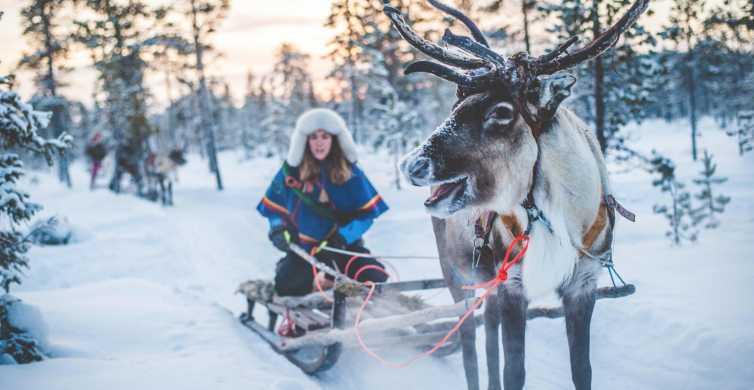 Rovaniemi: Arctic Animals Sleigh Rides and Wildlife Zoo