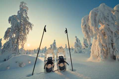 Rovaniemi: Hiking and Snowshoeing Adventure in Lapland