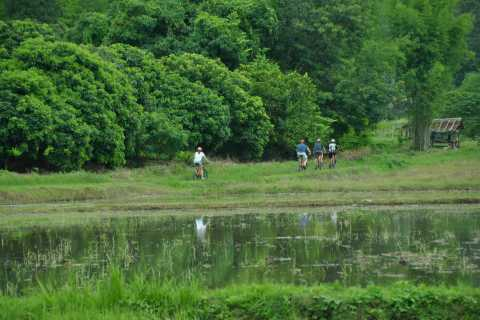 Chiang Mai Fields of Gold Cycling Tour