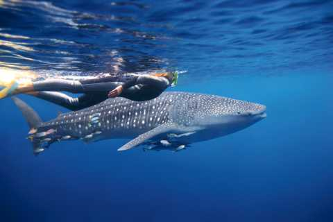 From Exmouth: Ningaloo Reef Eco Tour
