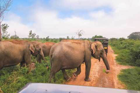 From Ella: Full-Day Udawalawe National Park Safari Tour