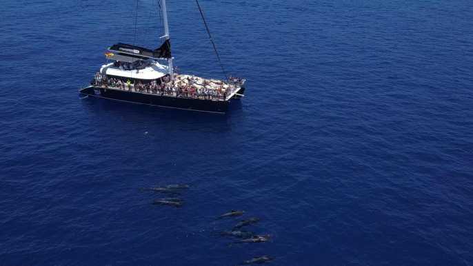 Costa Adeje: tour de avistamiento de ballenas con aperitivos