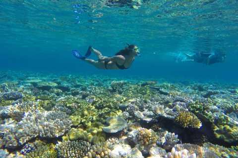 Port Douglas: Outer Barrier Reef Snorkel Cruise & Transfer